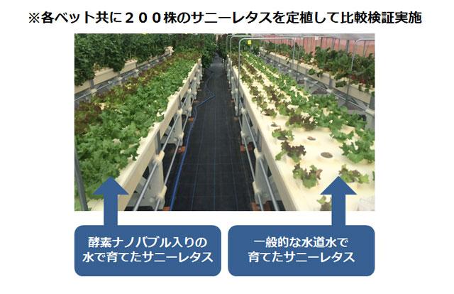 「水で日本の農業が変わる」ナノバブルウォーターe-sodachi(いいそだち)のご紹介│画像2
