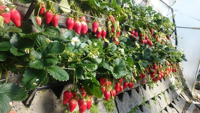 「水で日本の農業が変わる」ナノバブルウォーターe-sodachi(いいそだち)のご紹介│画像4
