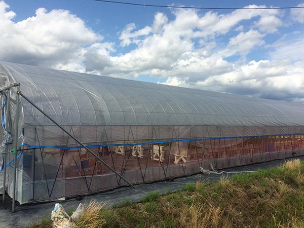 【いいそだち】カクイチ農業改善プロジェクト│画像4