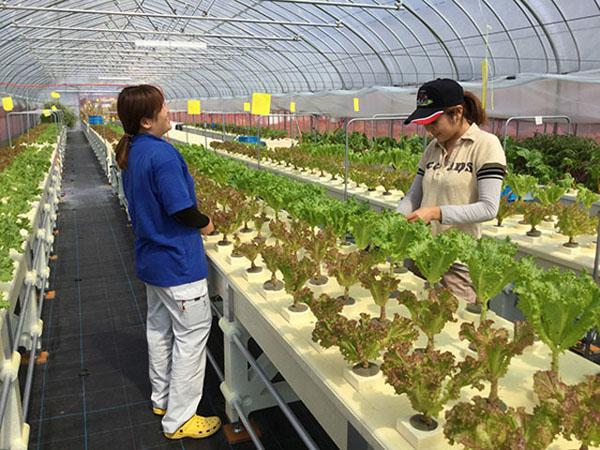 【いいそだち】カクイチ農業改善プロジェクト│画像6