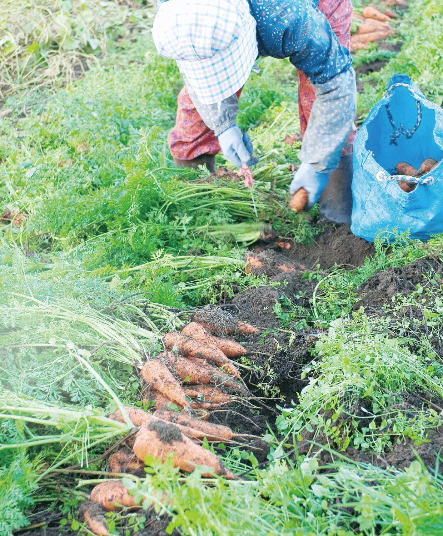 日本を農業で元気にする image