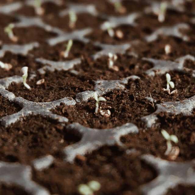 農作物の成長を促進 image