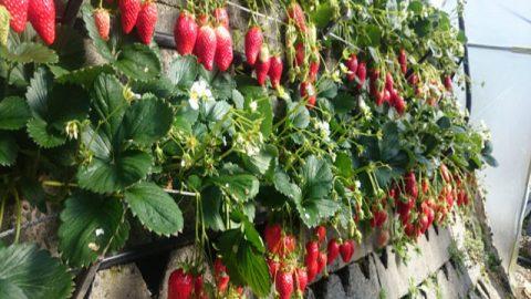 蒔くだけで農作物の生育促進。奇跡のナノバブル。