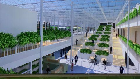 【ナノバブル】オランダ最先端農業研修-最終回-