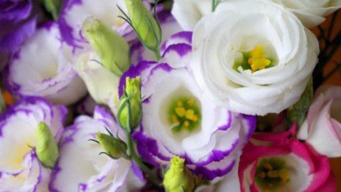 希望の花にかける新人花卉農家の想い