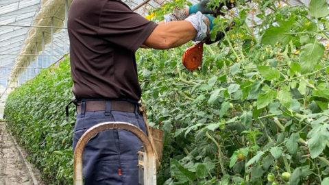 【福島県】ミニトマト栽培でのナノバブル導入事例
