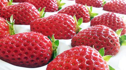 【和歌山県】イチゴ栽培でのナノバブル導入事例