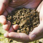 土づくりにおける微生物活用法とは