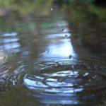 堆肥と土、微生物の関係とは?良質な堆肥の作り方