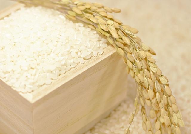 農作物におけるし奨励品種とは?種子法の影響は?画像1