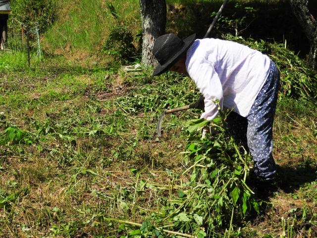 畑に発生する雑草について画像2