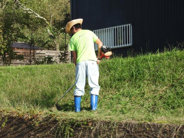 畑に発生する雑草について画像3