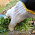 水田に発生する雑草の主な種類について