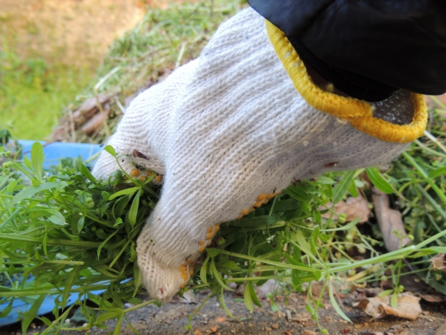 水田に発生する雑草の主な種類について画像4