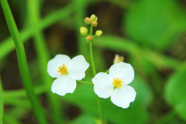 水田に発生する雑草の主な種類について画像2