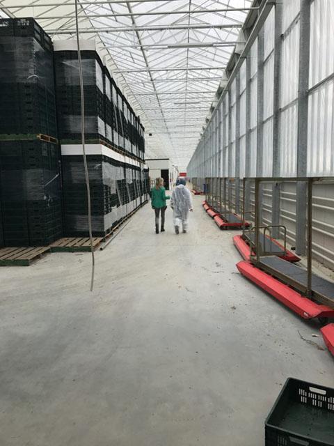 【ナノバブル】オランダ最先端農業研修 -第2回-│画像6