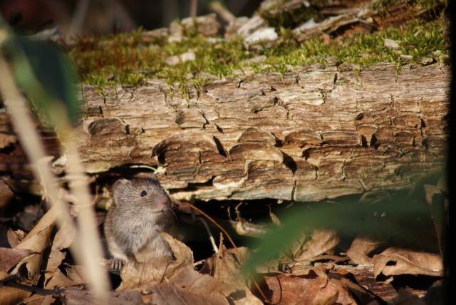 農業の大敵、ネズミによる被害の実情と有効なネズミ対策5選│画像2