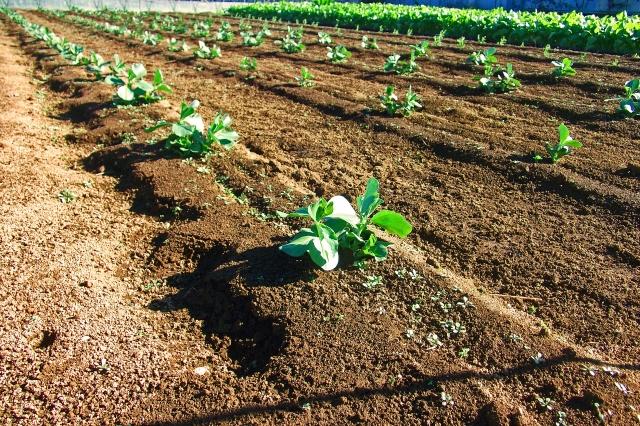 健全に農薬を利用しよう。農薬の現状と循環型農業のための農薬のススメ│画像2