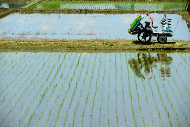 農作物被害では済まないタウナギの恐ろしい習性と駆除の考え方│画像1