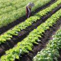 病害の特徴を学ぶ。農作物の病害を予防するために│画像1