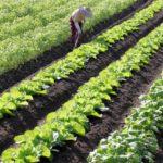 病害の特徴を学ぶ。農作物の病害を予防するために