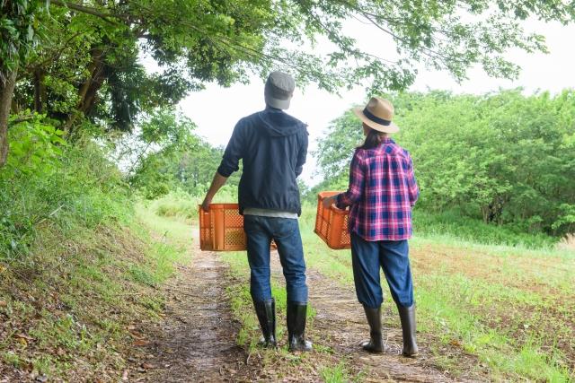 新規参入者は活用したい。農業次世代人材投資資金のメリットとデメリット│画像1