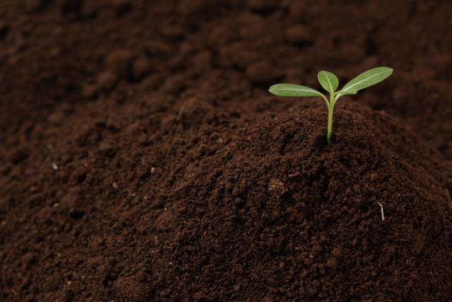 農業を支える縁の下の力持ち。土壌微生物の力に再注目!│画像1