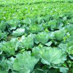 土壌微生物が豊かな土にもたらす効果について