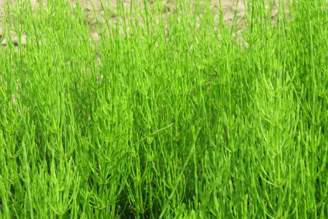 雑草を抜かない自然農法を始める具体的な方法と適している野菜リスト│画像2