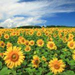 耕作放棄地がもたらす問題と、その対策