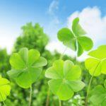 緑肥で経済的にも環境にも優しい農業を