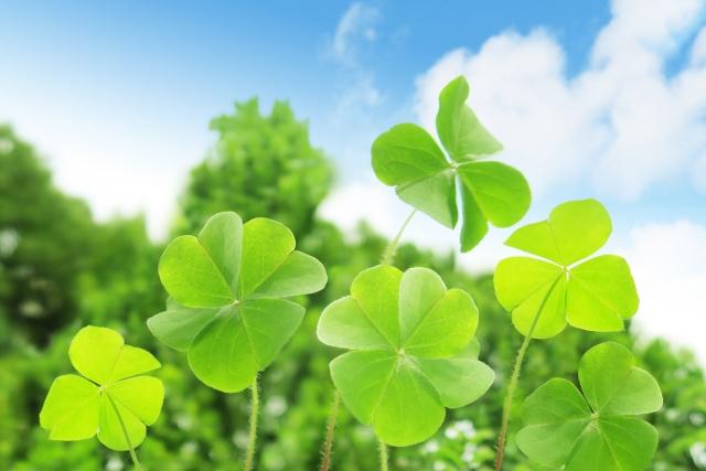 緑肥で経済的にも環境にも優しい農業を│画像2