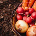 土づくりに役立つ?土壌医・土づくりマスター・土づくりアドバイザーとは?
