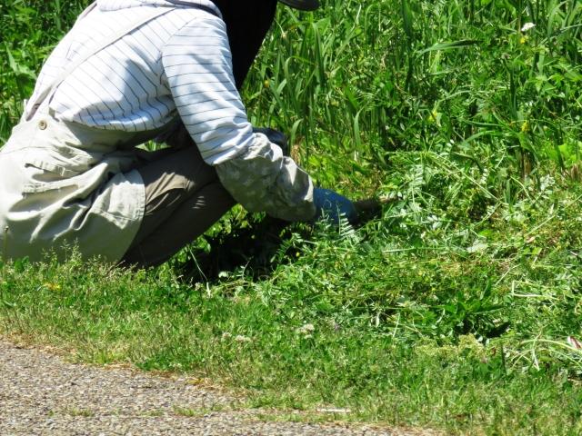 ヤギに雑草を食べてもらうエコ除草は害獣被害の対策にも使えるのではないか?│画像2