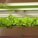 土を使わない農業新技術。水耕栽培、ポリエステル培地