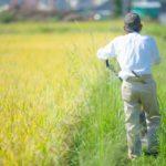 農業のハイテク化、進む。日本と海外の違い