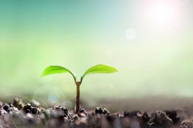 土壌改良について。耕作放棄地の復活につながる!?│画像1