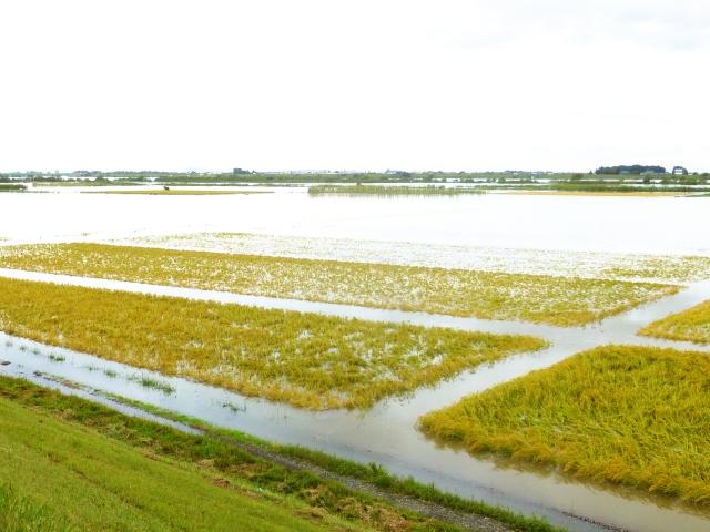 田畑が大雨に見舞われた時にすべき行動とは
