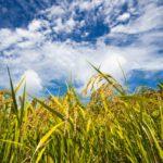 コメの減反補助金の廃止による日本の農業への影響