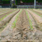 就農希望者の増加と共に拡大する生産緑地のレンタルビジネス