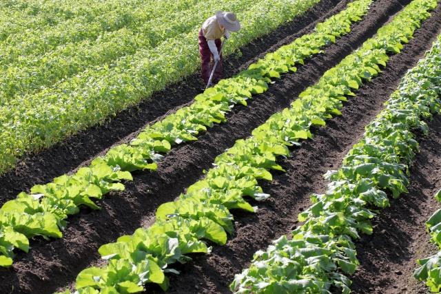 【農業を行うのに必要な資格、あると便利な資格 画像4】