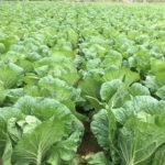 暖冬で考えられる農作物への悪影響とその対策法
