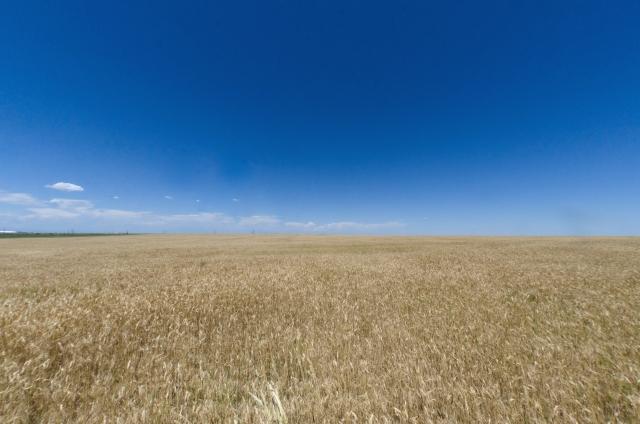 【世界の農業大国と日本の農業は何が違うのか|画像2】