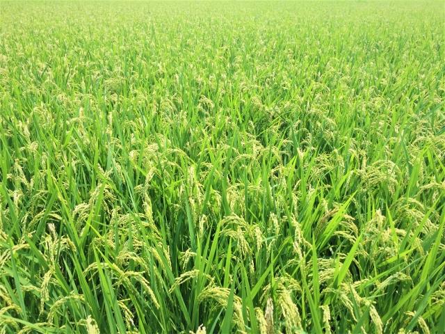 【【大規模農家VS小規模農家】メリット・デメリットを比較検証|画像1】