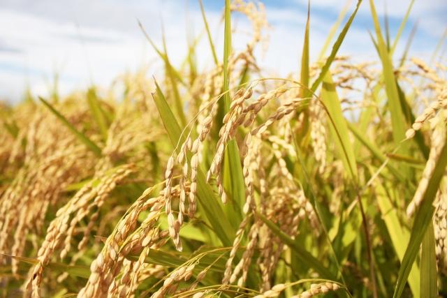 【【2018年版】日本の農作物輸出ランキング|画像4】