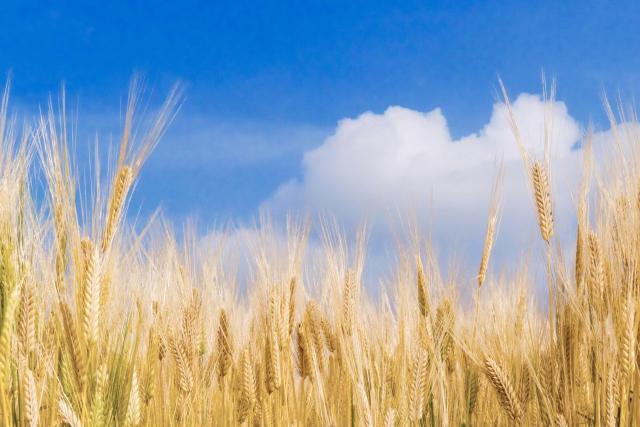 【今更聞けないカルタヘナ法。遺伝子組換え・ゲノム編集農作物に関わる法律とは|画像1】