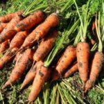 農作物ブランド化の方法と成功事例