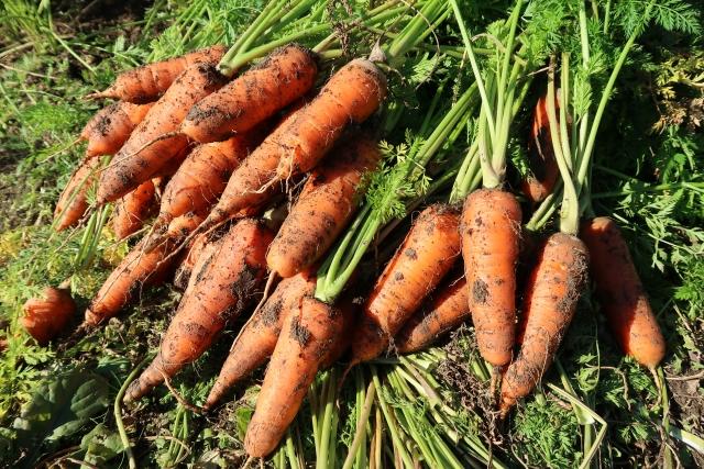 【農作物ブランド化の方法と成功事例|画像1】