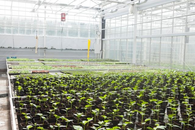 【世界の農業に学ぶ日本でも取り入れたい成功事例 画像3】