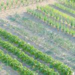 農薬が効かない耐性菌の存在とその対応策